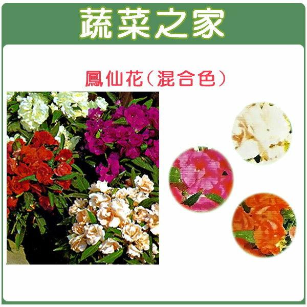 【蔬菜之家】H31.鳳仙花(混合色,高35cm)種子10顆