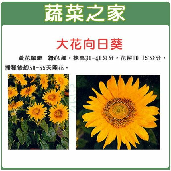 【蔬菜之家】H41.大花用向日葵種子5顆