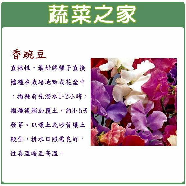 【蔬菜之家】H42.香豌豆種子10顆
