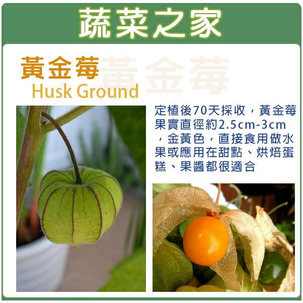 【蔬菜之家】I10.燈籠果(黃金莓)種子30顆