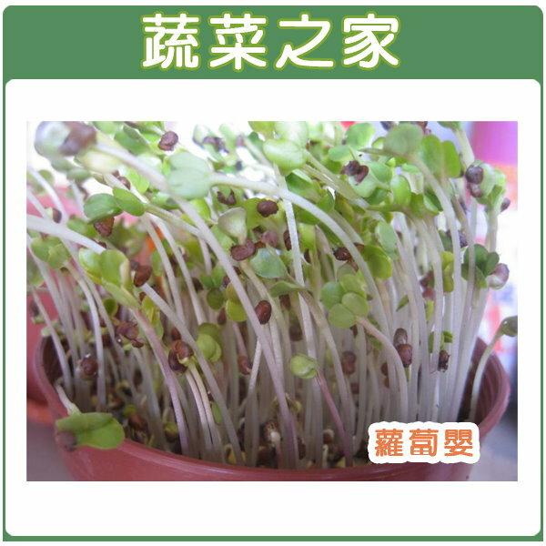 【蔬菜之家】J02.蘿蔔嬰(芽菜種子)種子1500顆