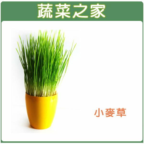 【蔬菜之家】J04.小麥草種子40克