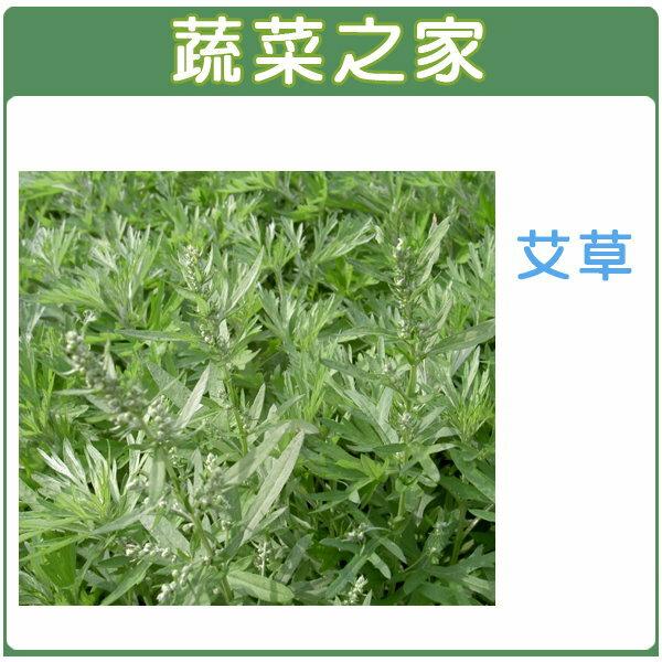 【蔬菜之家】K05.艾草種子 200顆