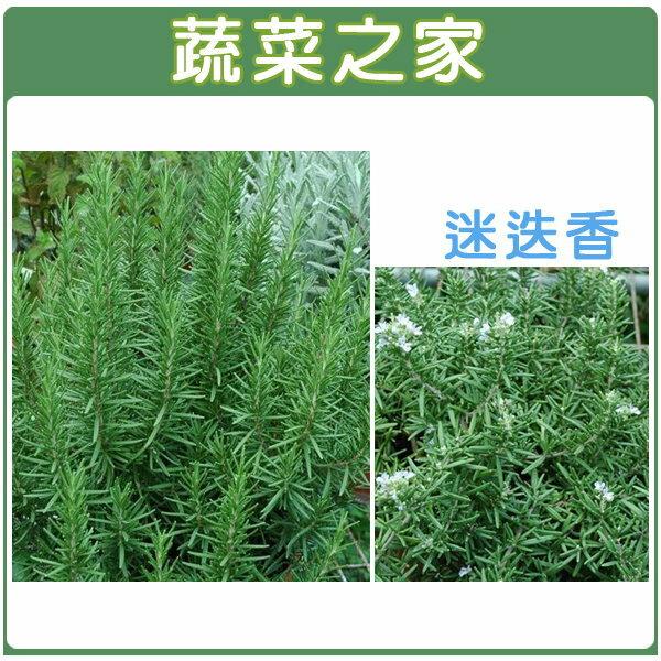 【蔬菜之家】K08.迷迭香種子20顆