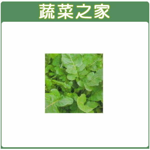 【蔬菜之家】K15.箭生菜種子(芝麻菜裂葉種)200顆