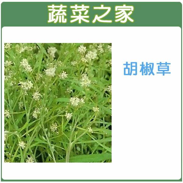 【蔬菜之家】K17.胡椒草種子100顆