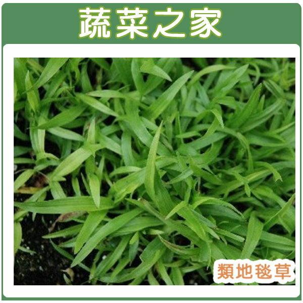 【蔬菜之家】M03.類地毯草種子5000顆