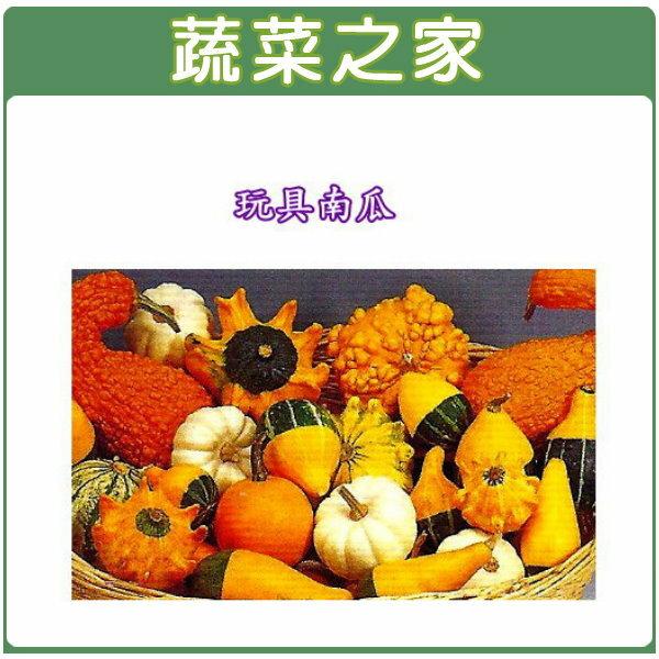 【蔬菜之家】大包裝P03.玩具南瓜種子(小玩具)150顆