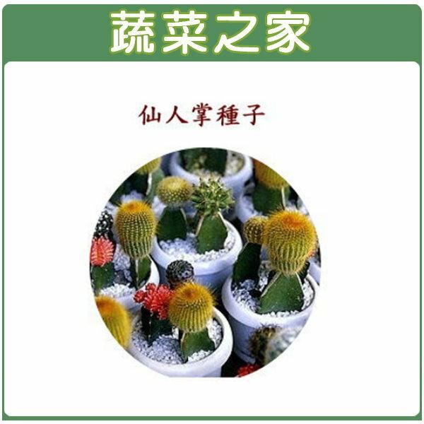 【蔬菜之家】P07仙人掌種子(多年生)15顆