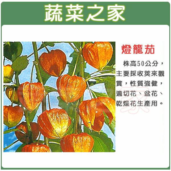 【蔬菜之家】P08燈籠茄種子50顆