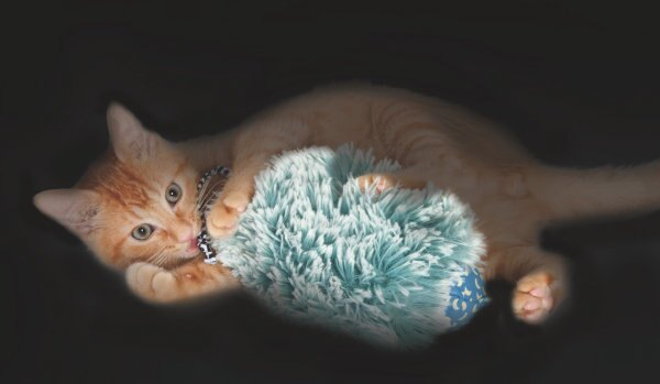 +貓狗樂園+ Petstages【夜光絨毛鼠貓咪玩具。741。黑暗空間發光、內含貓草】200元 1