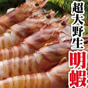 【築地藏鮮】超大野生明蝦 250g/份 共5尾★ 超人氣商品