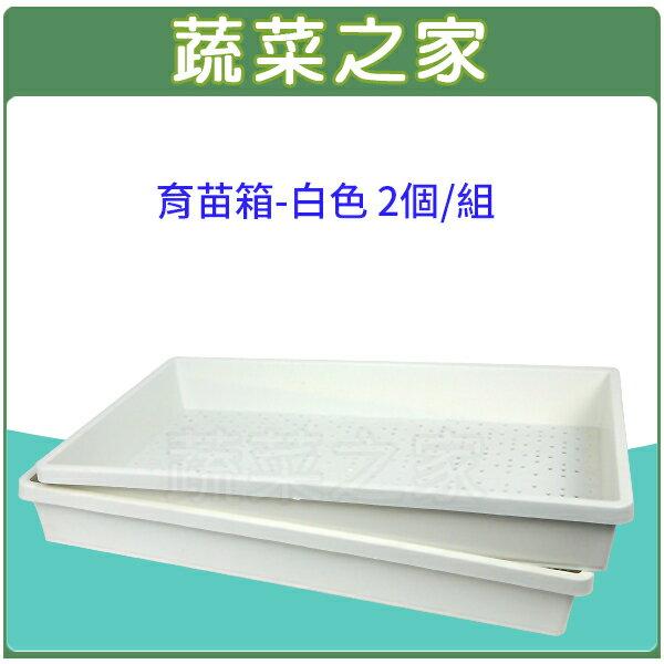 【蔬菜之家005-C86WI】育苗箱(育苗盤)-白色 2個/組(芽菜箱.可當四方型栽培盆端盤)