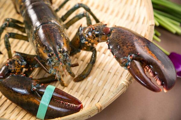 【食魚屋】加拿大波士頓龍蝦600±50g
