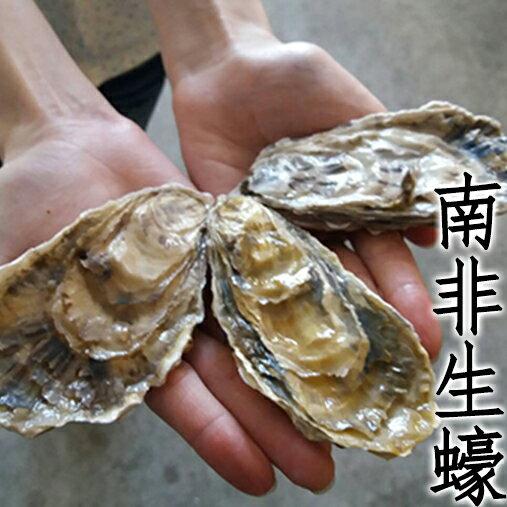 ㊣盅龐水產 ~南非^(勞力士^)生蠔~高 大顆生蠔 蛤蠣 貝 烤肉 刺身 生蠔 餐廳