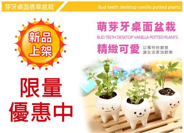 【蔬菜之家004-H19】Tooth Green芽牙桌面香草盆栽(隨機出貨)(新品限量優惠中)