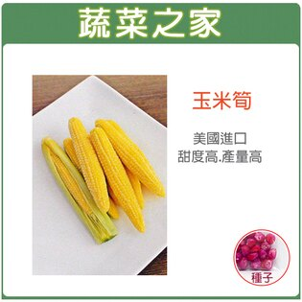【蔬菜之家】G97玉米筍種子20顆