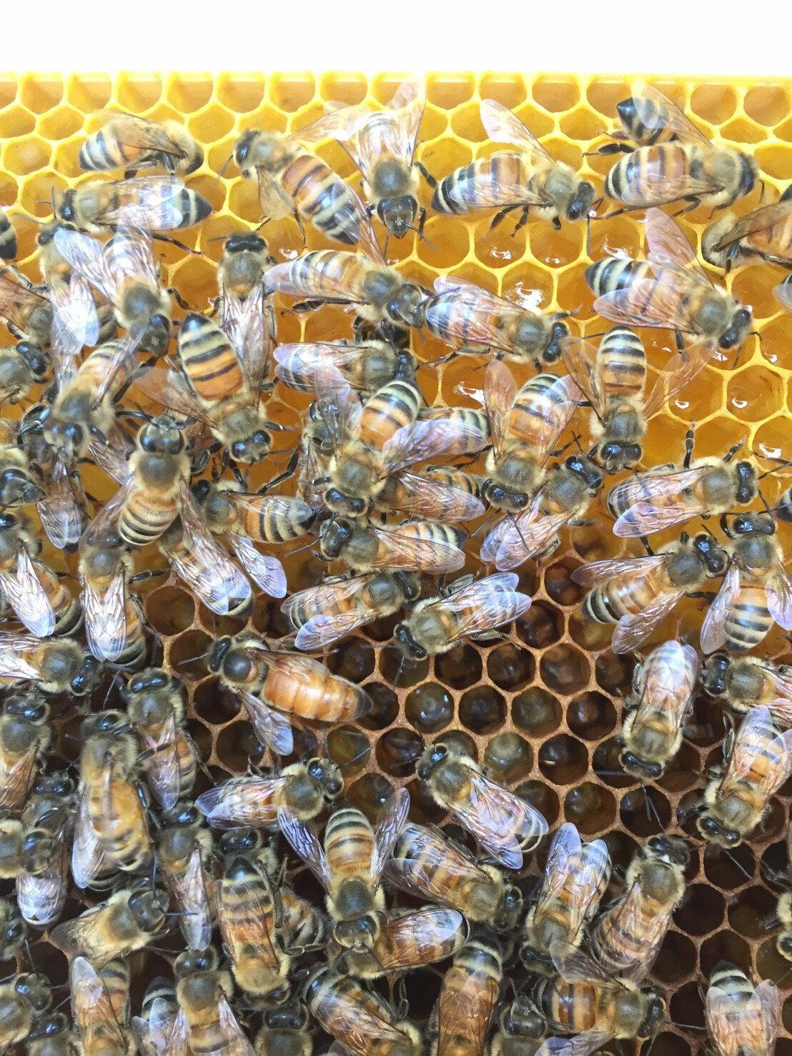【萬烽養蜂場】國產百花蜂蜜 700g±1%-2016春蜜 3
