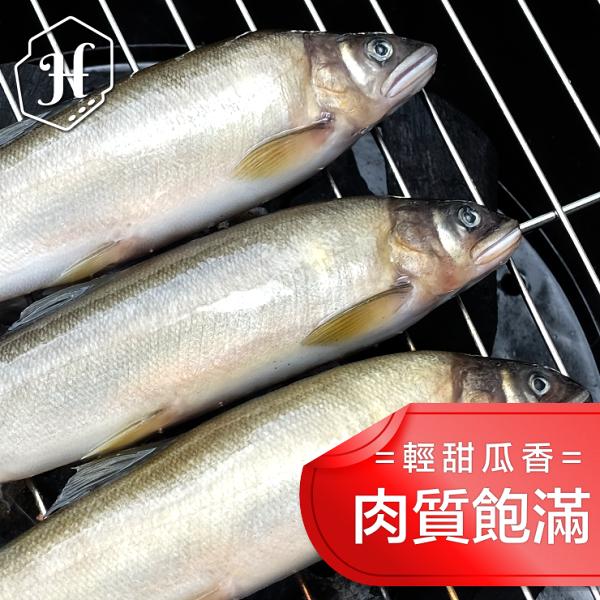 『家適海鮮』台灣宜蘭南澳 肥美香魚 8尾920克裝★專區商品任選四樣79折★ 。適合:鹽烤、醬燒