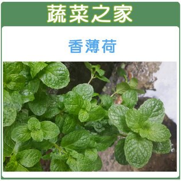 【蔬菜之家】K10.香薄荷(綠薄荷)種子200顆
