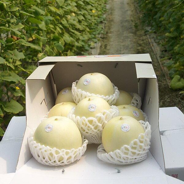 ★預購★寶島果園 翡翠甜瓜 禮盒 (5斤盒裝)  品質最優、甜度最高的超優質美濃瓜  台灣水果