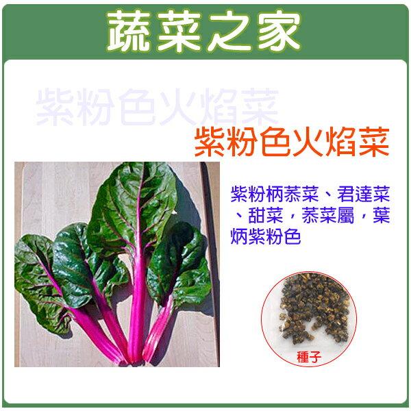 【蔬菜之家】A80.紫粉色火焰菜種子100顆