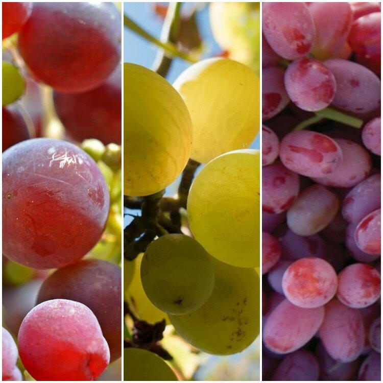 市場獨家!3色加州葡萄