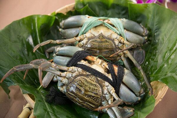 【食魚屋】菲律賓產地直銷鮮活沙公550g±50g/隻