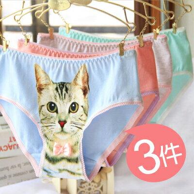 馬卡龍小貓咪棉質內褲