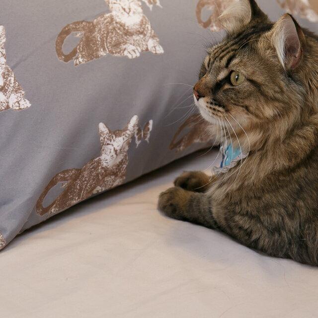 Iron cat 鐵灰小貓【床包駝色素色】單人/雙人熱賣組  舒適磨毛布 台灣製造 7