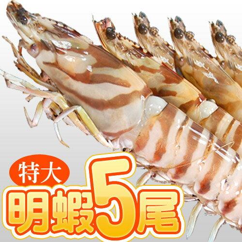 ~築地一番鮮~特大5尾明蝦^(約450g 盒^)