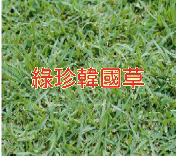 【尋花趣】綠珍韓國草 種子  100公克/包 草皮種子
