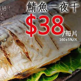 ㊣盅龐水產 ◇38元鯖魚一夜干S號◇每片38元 140-170g/片 (歡迎.批發.團購 )