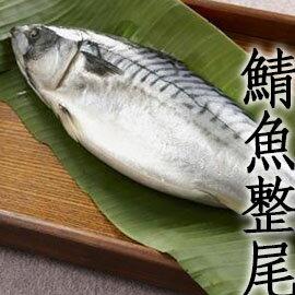 ㊣盅龐水產 ◇整隻挪威鯖魚(原料)◇600g±10%/隻  每隻$170 挪威產 保證全場最低 團購 批發 燒烤