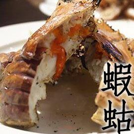 ㊣盅龐水產◇蝦蛄(螳螂蝦)◇350g±10%/隻以上 媲美龍蝦肉 批$550/KG 零$285/隻 歡迎批發