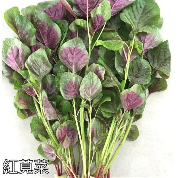 『水野菜』無農藥「紅莧菜」250g