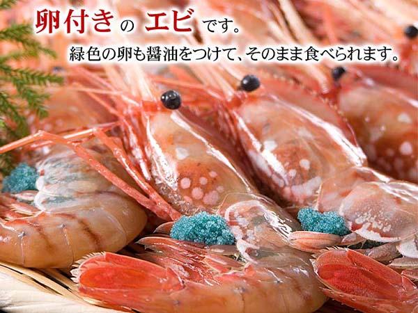 【大和水產】日本空運 產地直送 冰鮮 牡丹蝦 冷藏非冷凍 特大尾  50~70g/隻 每周2 5到貨 需提前預訂 時價銷售
