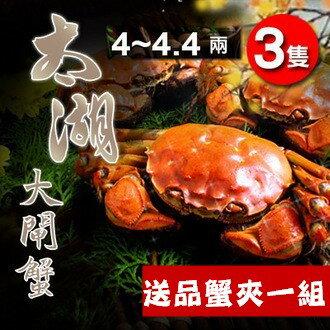 長江太湖大閘蟹4~4.4兩(3隻)