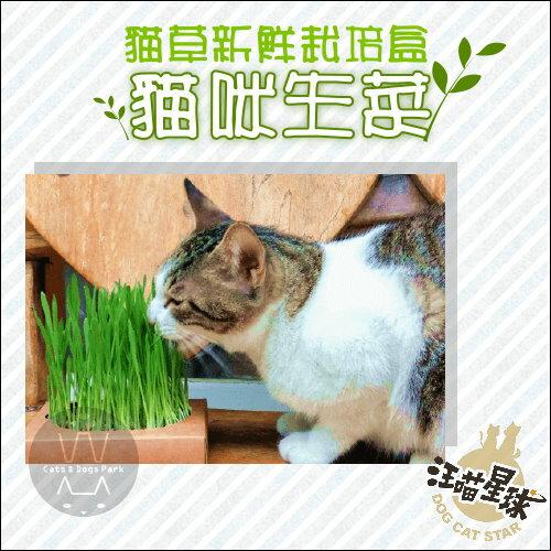 +貓狗樂園+ 汪喵星球|貓草新鮮栽培盒。貓咪生菜|$150 貓草