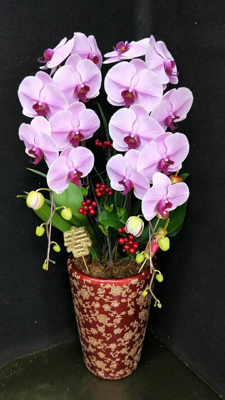 蘭花禮品 追思弔唁造型花藝-006-12-007-7株-蝴蝶蘭 蘭花組合 蘭花送禮 蘭花禮盆