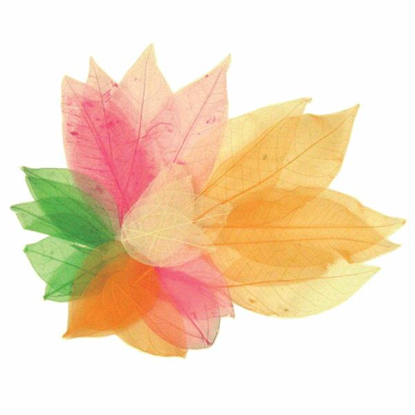 【華森葳兒童教玩具】美育教具系列-乾燥樹葉 L1-AP/2015/SL