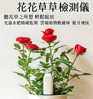 【coni shop】小米花花草草監測儀 國際版 APP控制 植物檢測儀 測土儀 智能檢測器 土壤 香料 肥料 溫度 園藝 盆栽
