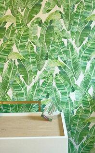 綠色植物香蕉葉BananeiraGreenPalmWallP-Bananeira