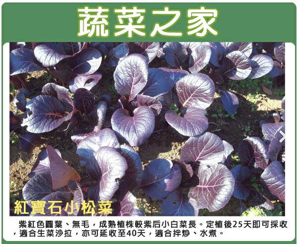 【蔬菜之家】A75.紅寶石小松菜種子(共有2種包裝可選)