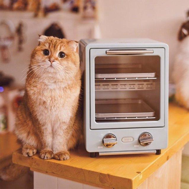 日本Toffy雙層烤箱家用烘焙多功能迷你小型電烤箱9L NMS 220V小明同學 秋冬新品特惠