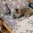 Iron cat 鐵灰小貓【床包鐵灰小貓】單人/雙人熱賣組  舒適磨毛布 台灣製造 3