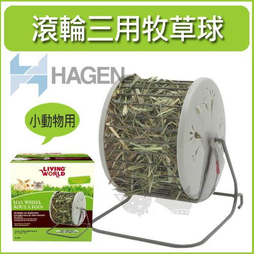 《加拿大 HAGEN 赫根》滾輪式三用牧草球 / 小動物用