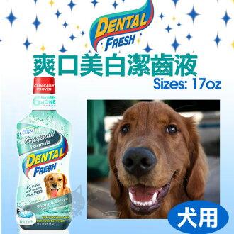 《DENTAL FRESH》爽口美白潔齒液【狗狗專用漱口水】17oz