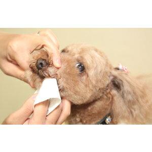 《金牛座TAURUS》寵物齒垢清光光 - 牙菌斑清除紙巾 / 犬貓口腔專用