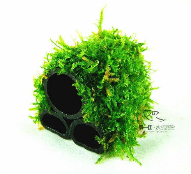 [第一佳 水族寵物]真水草 -陰性水草 [小三角默思/莫絲- 竹炭管 三管蝦屋] (造景、淨水兼具,非一般橡膠管)